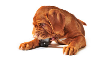 cute dog with phone